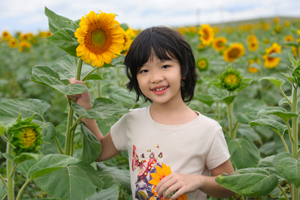 Young Child With Sunflower